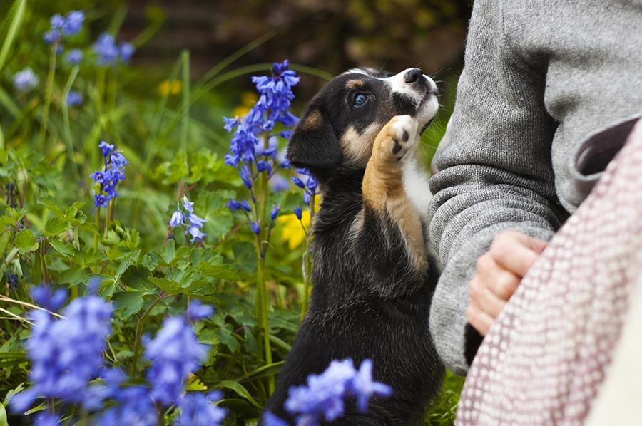 Pet Hazards of Glorious Spring Time!