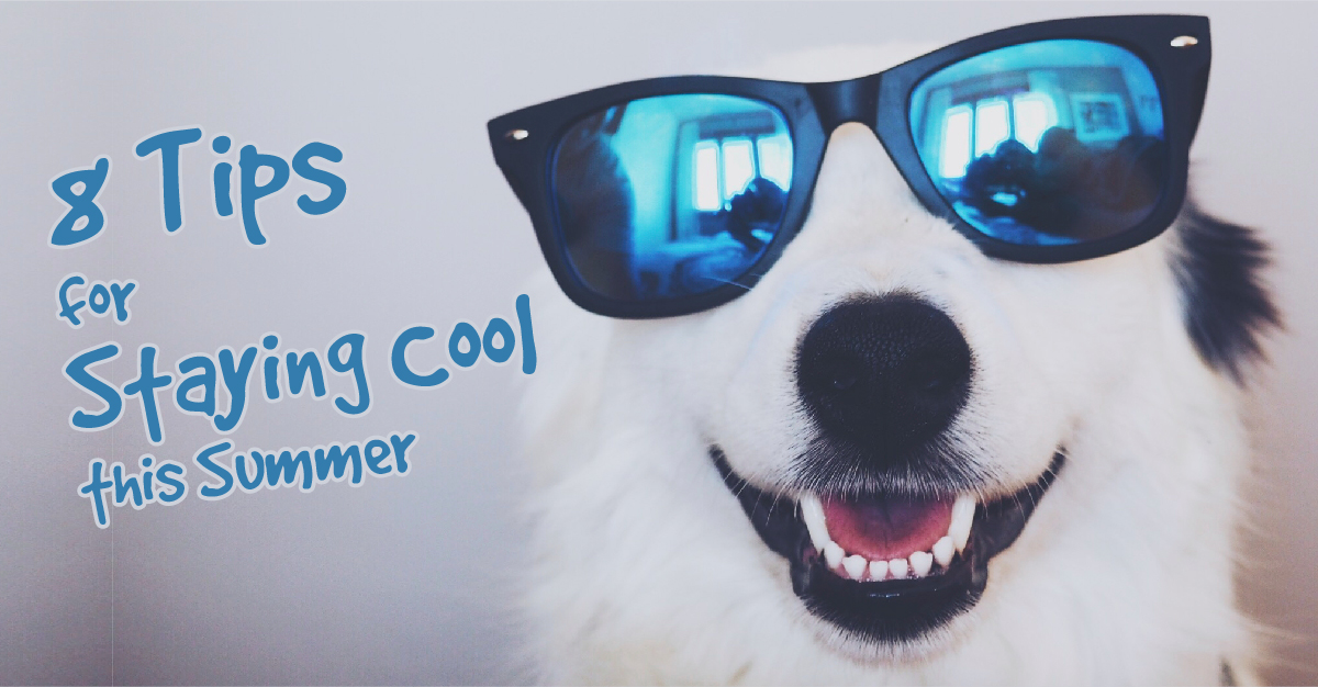 8 Tips For Keeping Your Dog Cool