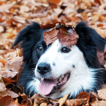 Autumn Adventures – Are you the winner?
