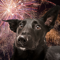 10 Top Tips For Pets & Fireworks