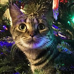 Seasonal Dangers to Cats & Dogs