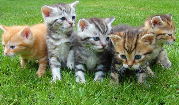 Vaccination Guidelines – Kitten