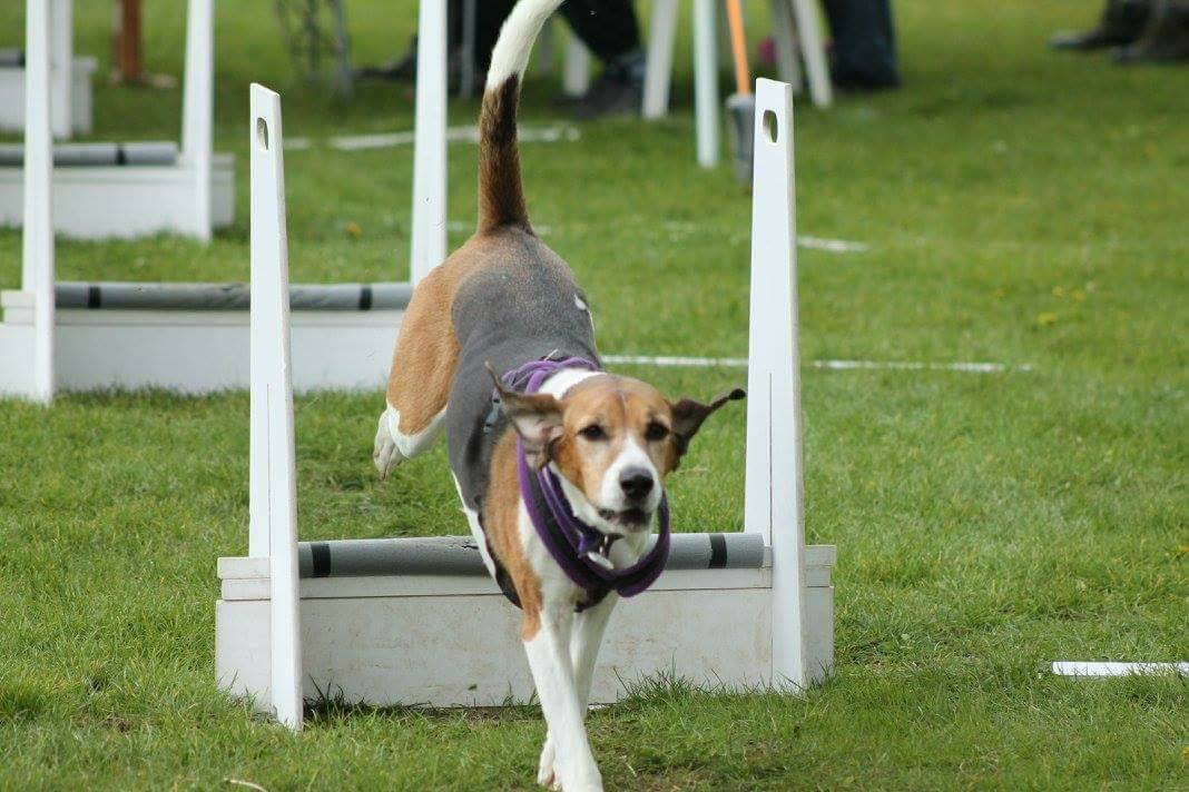 Wicked Flyball Club… an exciting year ahead!